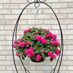 impatiens double flowered 11 inch sparkler double rose