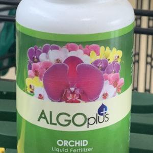 algoplus orchid