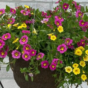 Annuals - Baskets & Containers