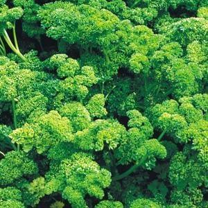 Annuals 2021 - Herbs